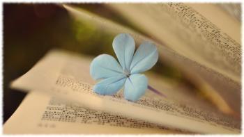 Книги, от которых хочется плакать